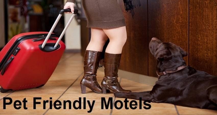 Pet Friendly Motels
